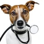 Vacinas essenciais para os cães