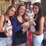 Estudantes criam app para adoção de cães