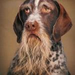 A velhice de um cão