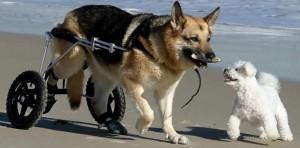 paraplegicos