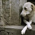 Brasil tem 20 milhões de cães abandonados