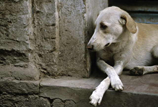 photolibrary_rm_photo_of_abandoned_dog