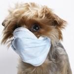 O que é zoonose?