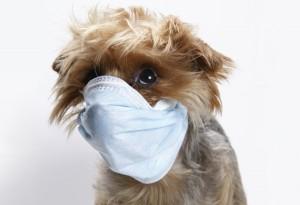 sick-small-dog
