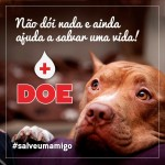 Tenha um animal doador de sangue