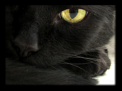 gato-preto-1