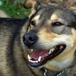 Como melhorar a vida do seu cão