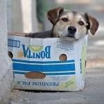 Adote um cão e salve uma vida