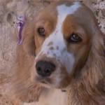 Cães são vítimas de maus-tratos em petshop
