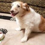 Morre a cadela mais velha do mundo