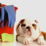 Como lidar com ingestão de produtos de limpeza