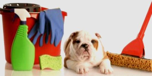 cachorro-produto-limpeza