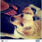 A 1ª foto do Instagram foi de um cão