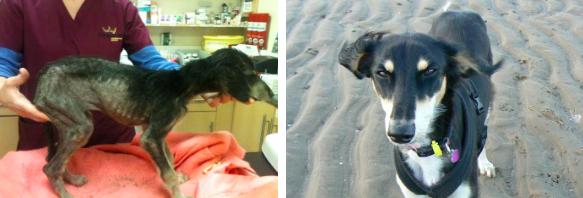 transformacao-cachorro-beryl