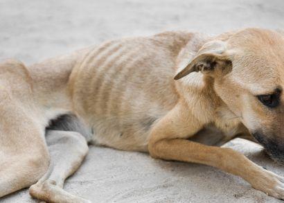 Animal-Welfare-dog
