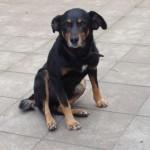 Cão é encontrado após queda de avião