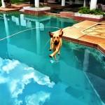 30 fotos de cães tiradas na hora certa
