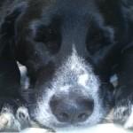 Cinco curiosidades sobre o sono dos cães