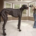 Morre o maior cachorro do mundo