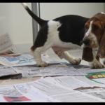 7 dicas para seu cão fazer xixi no lugar certo