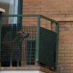 Cão de enfermeira com ebola é sacrificado
