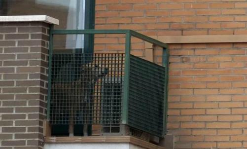 Cão Excalibur é sacrificado e gera protesto na Espanha Foto: Pedro Armestre / AFP