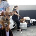 Idosa que mantinha 30 cães é detida por maus-tratos