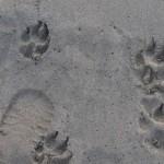 Areia da orla de Santos está contaminada