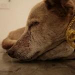 Como lidar com cães maltratados