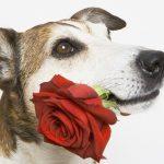 Seu cachorro ama você?