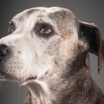 Adote um cão idoso