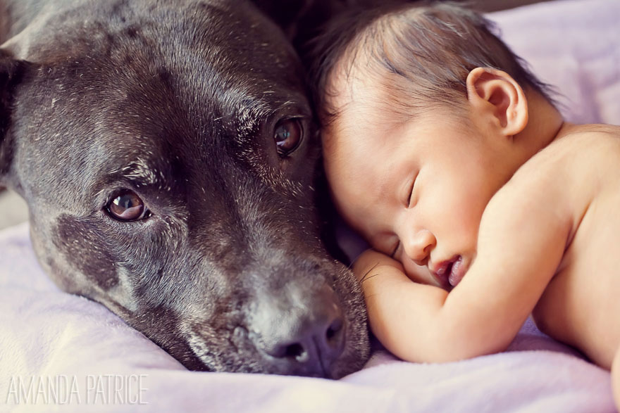 small-babies-children-big-dogs-11