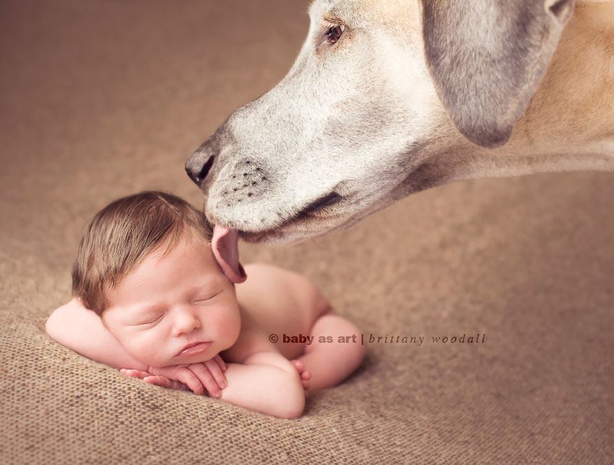 small-babies-children-big-dogs-12