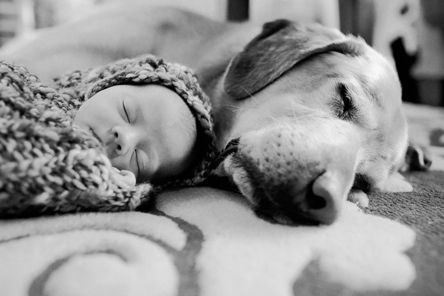 small-babies-children-big-dogs-13