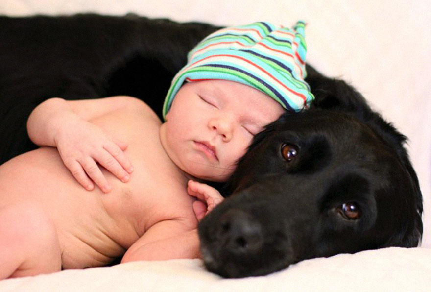 small-babies-children-big-dogs-14