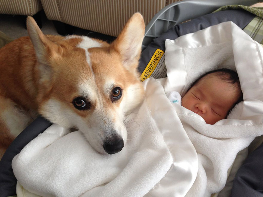 small-babies-children-big-dogs-19