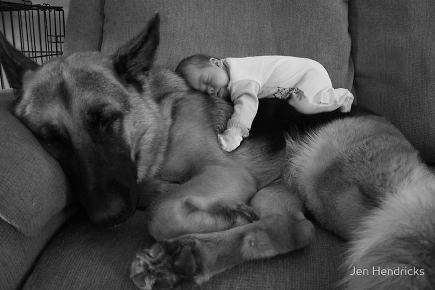 small-babies-children-big-dogs-3