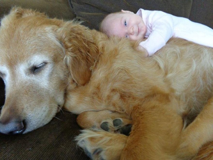 small-babies-children-big-dogs-6