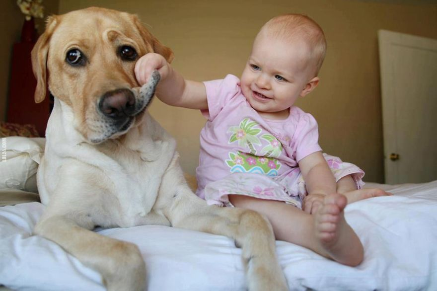 small-babies-children-big-dogs-8