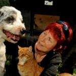 """""""Parem de comer gatos e cães"""", dizem ativistas suíços"""
