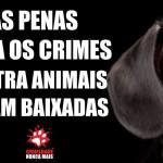 Senadores baixam pena de crime contra animais