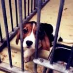 Santos proíbe vivissecção e teste em animais