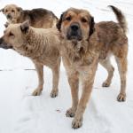 Cães SRDs: Conheça 6 curiosidade sobre eles
