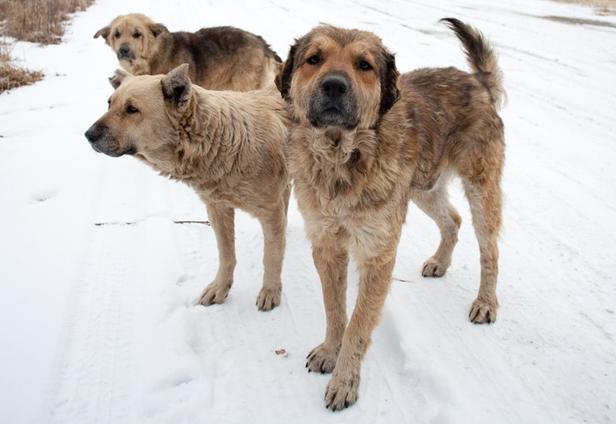cachorros-srd