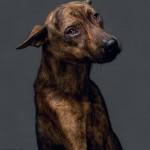 Cães são fotografados horas antes de morrer