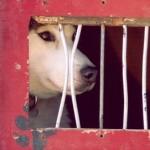 Maus-tratos de animais lideram denúncias no Rio