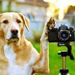 Dicas para fotografar um cão