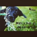 Mate a sede de um cão de rua