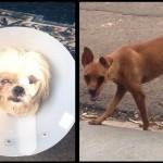 Homem espanca dois cachorros, em Marília
