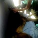 CCZ de PG ajuda dono encontrar cão